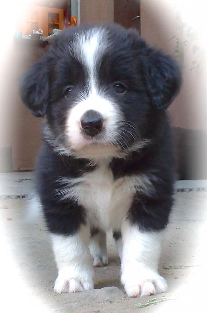 Ziggy, 6 Wochen