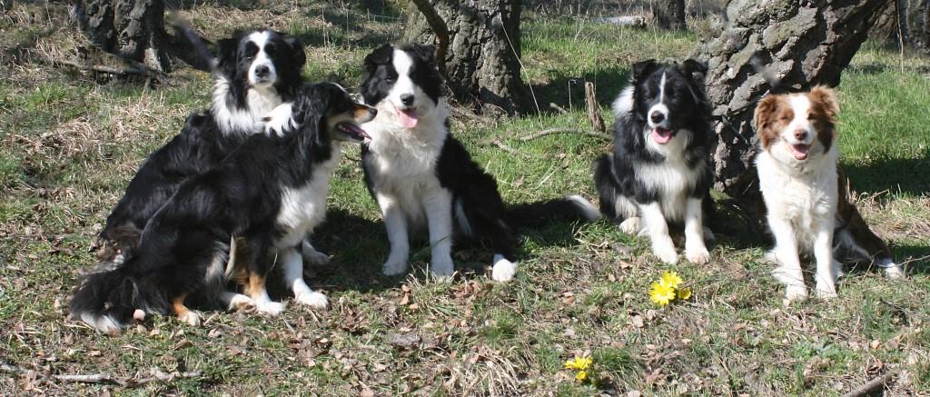 2016 - 5 Hunde